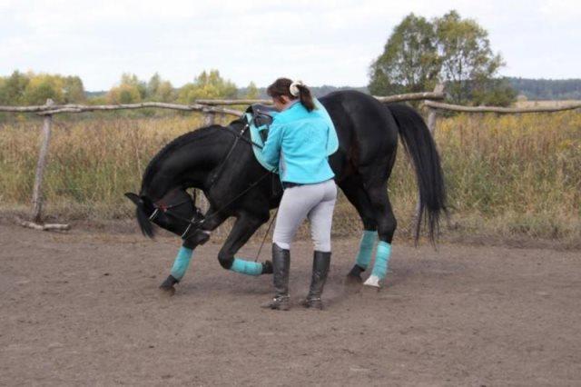 Как правильно подготовить лошадь к обучению