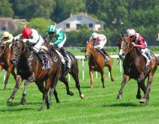 Отличительные характеристики самой быстрой породы лошадей