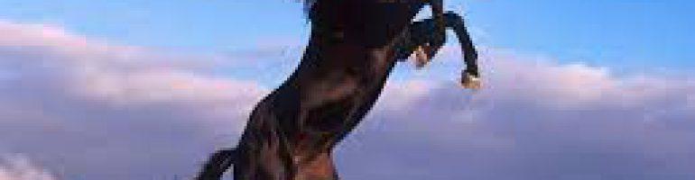 Интересные факты о самой высокой лошади в мире