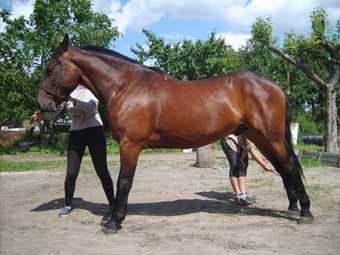 Как научить лошадь трапеции: упражнения
