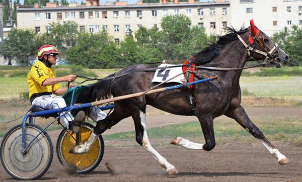 Физические параметры самой быстрой и выносливой лошади в мире