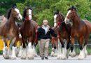 Представители самых знаменитых лошадей