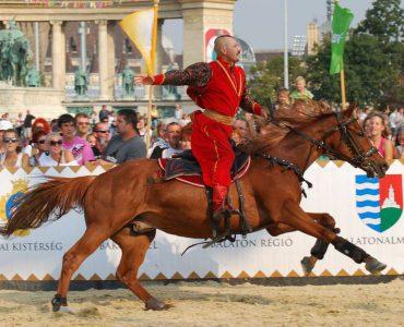 Характеристика самых выносливых лошадей