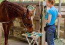 Интеллектуальные способности самых умных лошадей