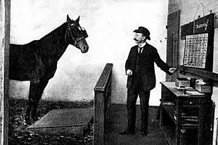 Первая самая умная лошадь в мире