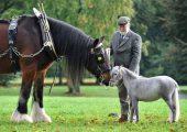 Достижения самой умной лошади в мире