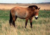 Известные старожилы среди лошадей