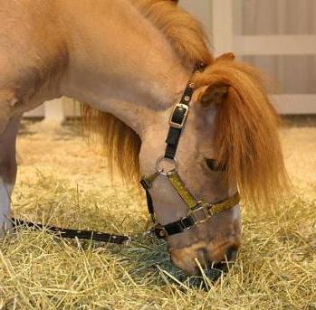 Питание и возраст лошадей