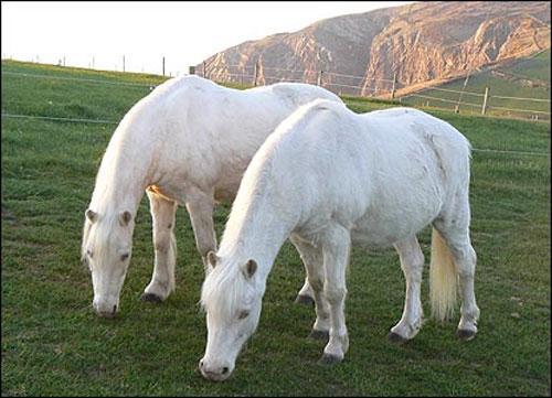 Знаменитые близнецы-долгожители