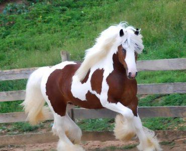 Критерии выбора самой лучшей лошади
