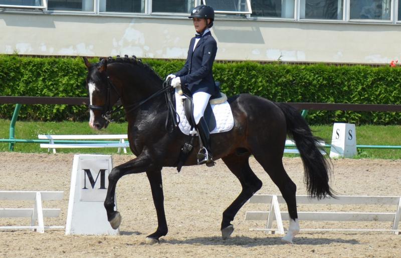 Топ-10. Самые красивейшие породы лошадей