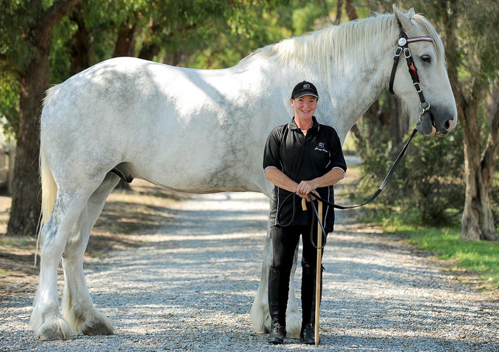 Размеры и достижения самой крупной лошади
