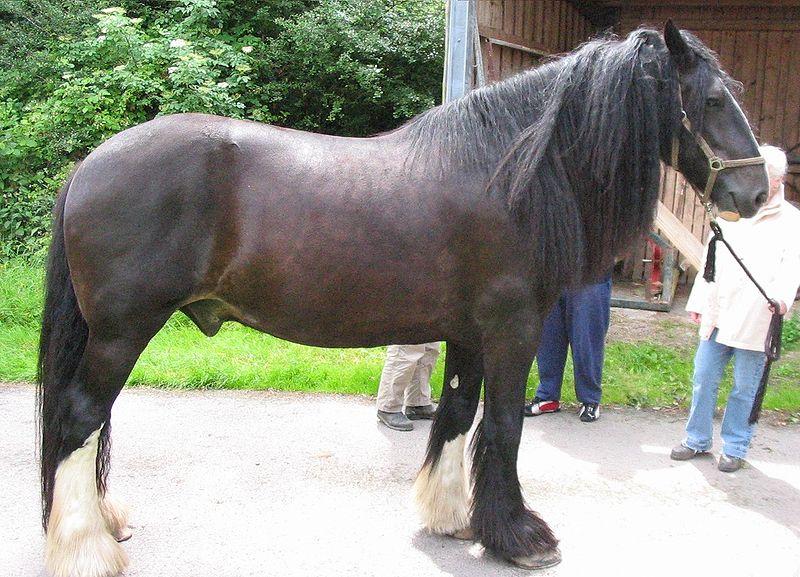 Размер головы лошади