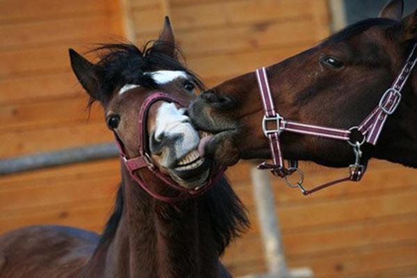 Характеристики лошадей