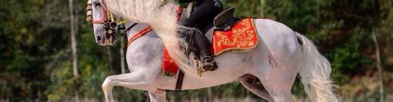 Как научить лошадь пиаффе с помощью различных трюков