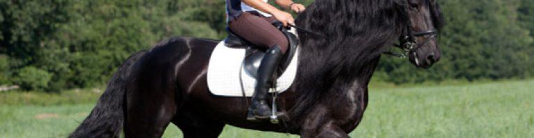 Как нужно правильно учить лошадь верховой езде
