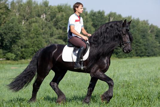 Как обучают лошадей верхом