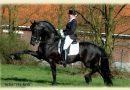 Элементы обучения лошади испанскому шагу