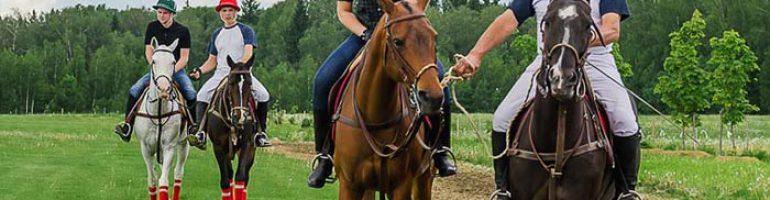 Как научить лошадь верховой езде и выполнять ряд команд