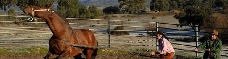 Основные приемы и правила приручения лошади