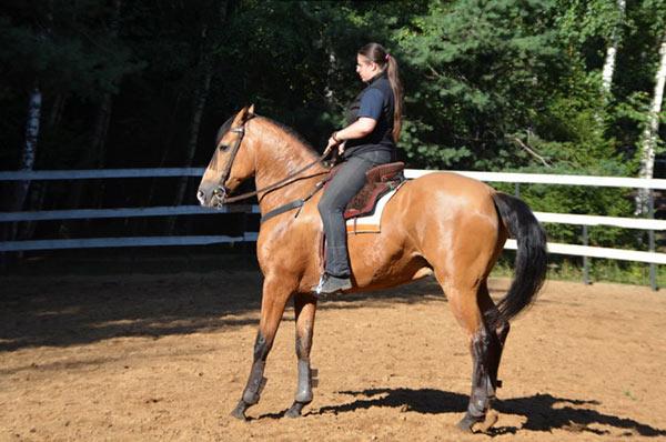 Как правильно осаживать лошадь