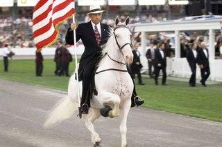 Американские лошади американская кучерявая лошадь