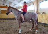 Виды лошадей чалой масти
