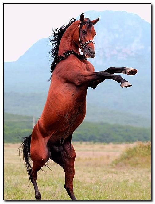 История норикийской породы лошадей