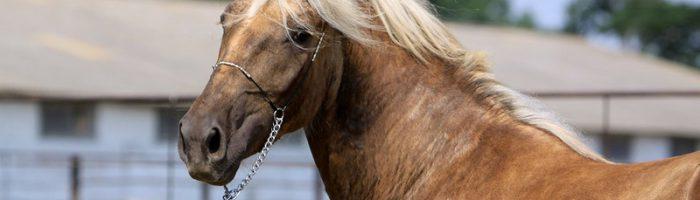 Популярные породы американских лошадей